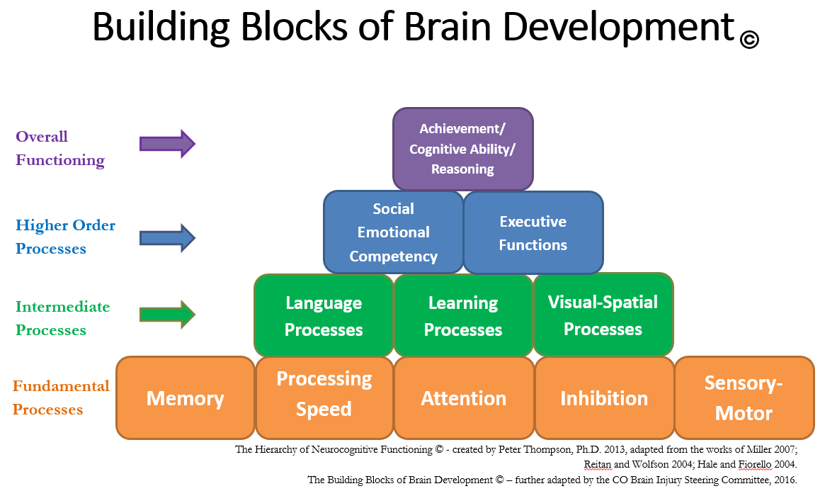 Building Blocks of Brain Development